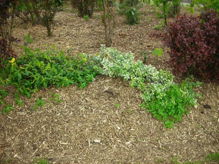 garden-mulch-northern-beaches-sydney_small.jpg