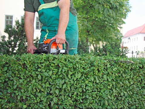 hedge-trimming-services-northern_beaches-sydney_small.jpg
