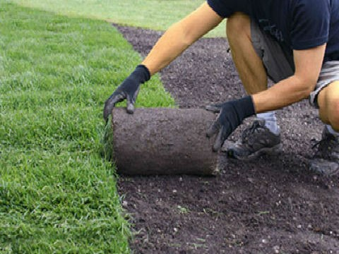 lawn-care-northern-beaches-sydney_small.jpg