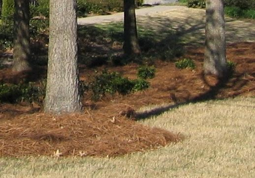 mulching-services-northern-beaches-sydney_small.jpg
