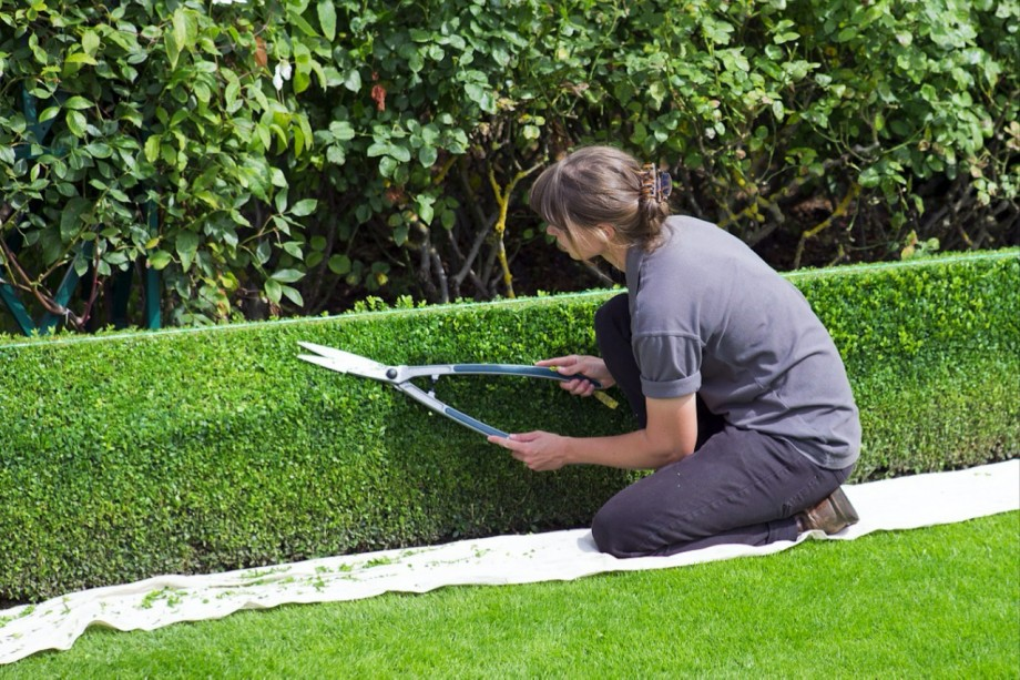 trimming-hedges-northern-beaches_sydney_small.jpg