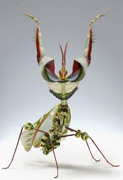 mantis1.jpg