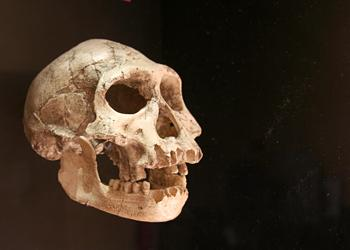 Crâne Homo georgicus