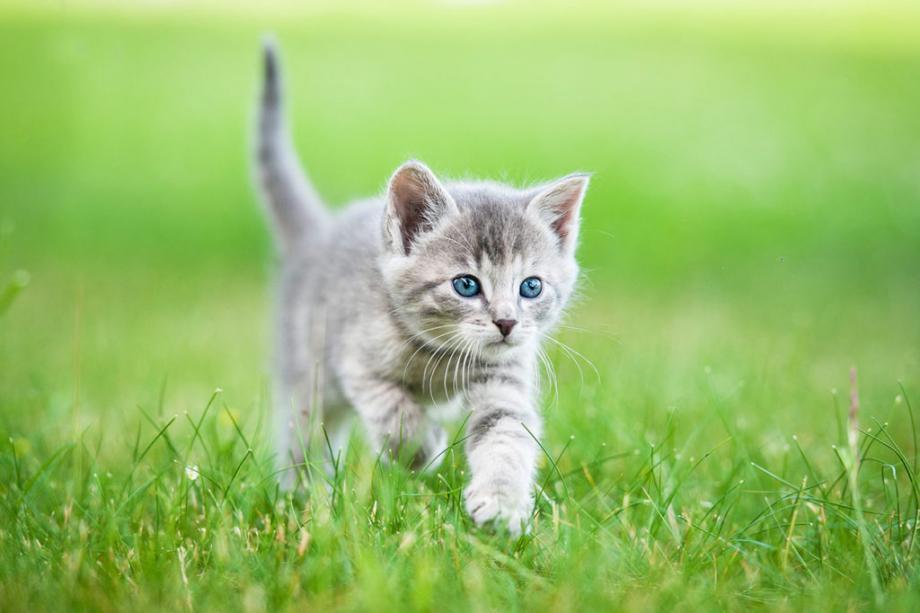kitten-1024x682.jpg