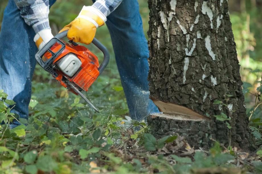 treeservicefortlauderdaletreeremoval2_orig.jpg