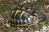 carriere-tortue