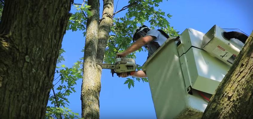 tree-removal-tuscaloosa-al.jpg