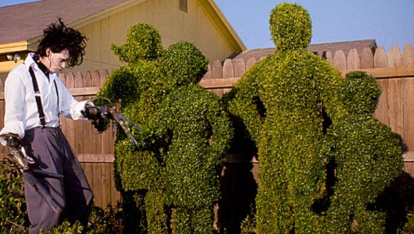 Tender Care Lawn Services | Landscape And Lawn Maintenance Services - Trimming Shrubs