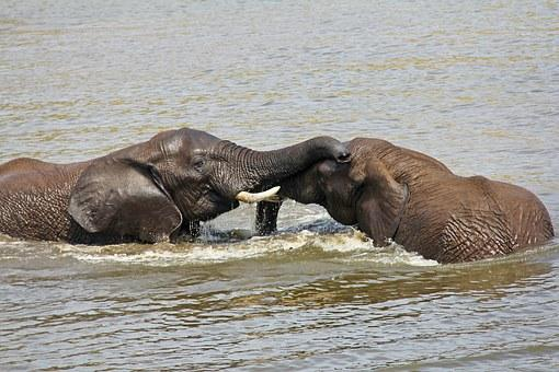 Elephants Playing Water Exciting Adventure