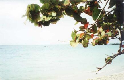 plaża w MoBay