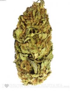 Cannabis Seeds Arkansas