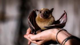 'Didn't know it's virus reservoir': Chinese travel blogger forced to apologize for eating BAT on camera (VIDEO)