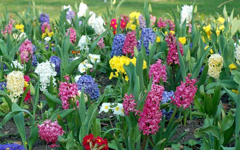 Tender Care Lawn Care Services | Best Flowering Shrubs For Spring And Summer For Your Landscaping In Lake Charles