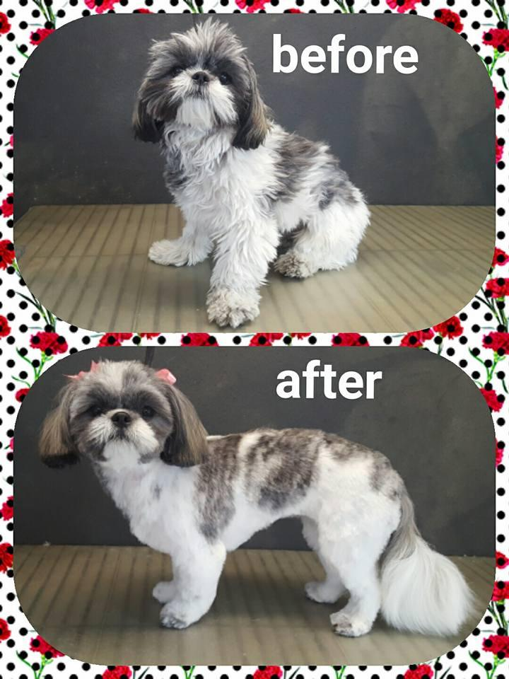 Dog grooming in Louisville