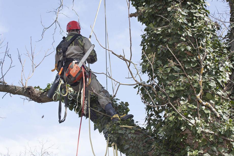 tree-removal-tuscaloosa.jpg