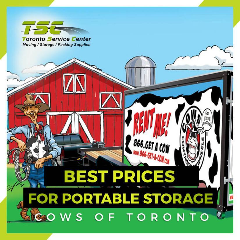 Cows of Toronto