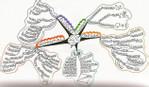 mapa myśli