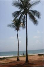 jedna z plaz wokol Freetown