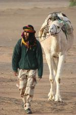 one of the white camels...