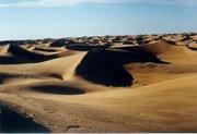 Remember: Wet like the everglades, not dry like the desert.
