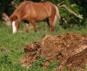 Obornik koński ma podobny skład do bydlęcego. Jest nawozem gorącym.