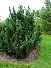 A well maintained bush is a happy bush