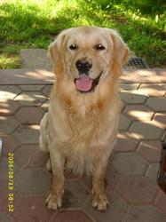 mój pies-Falkor