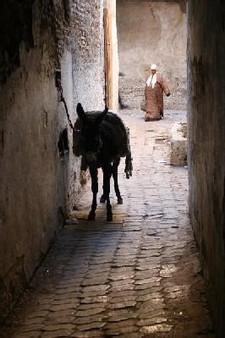 one of the narrow streets of Fes' medina