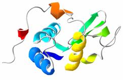 http://upload.wikimedia.org/wikipedia/commons/2/2b/Lysozyme.png