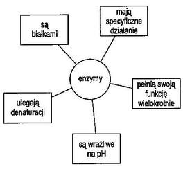 http://www.zs9.bydgoszcz.pl/grafika/enzymy.jpg