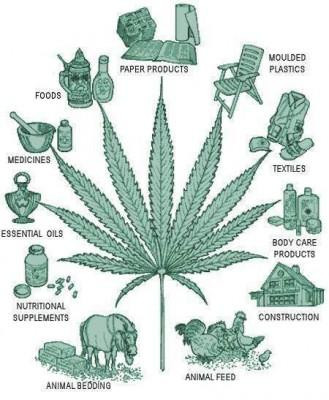 cannabis-industrial