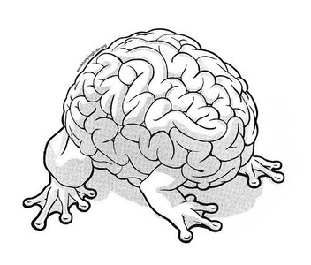 brain-pic1_small.jpg