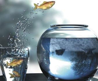 fish-jumping.jpg