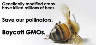 GMO-bees-400x191