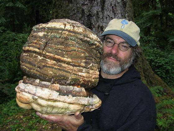 mushrooms-for-pest-control-2