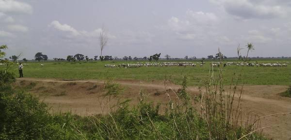 nigeria-taraba-1.jpg