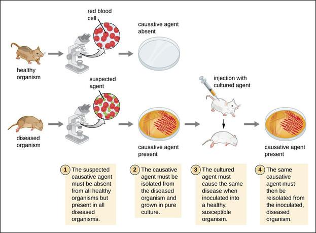 kochspostulatesmicrobiology.jpg