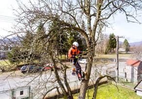 neighborhood-tree-cutting.jpg