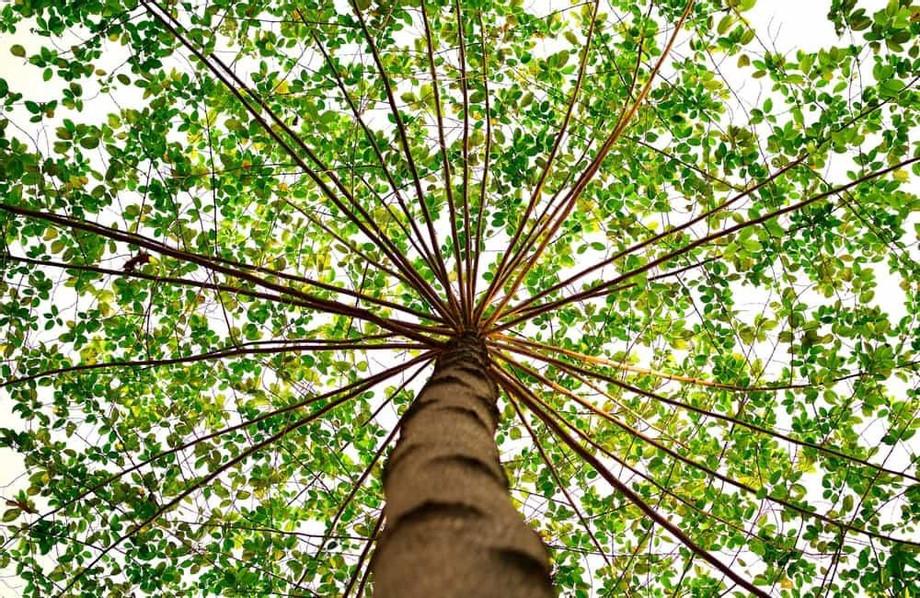 bright-green-canopy_orig.jpg