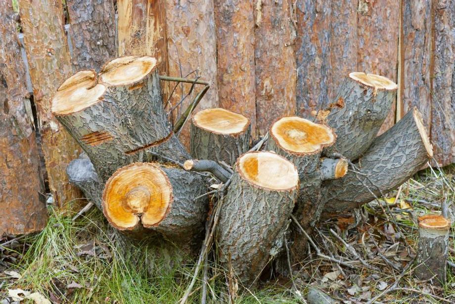 Butler-County-Landscaping-Stump-Grinding-1.jpg