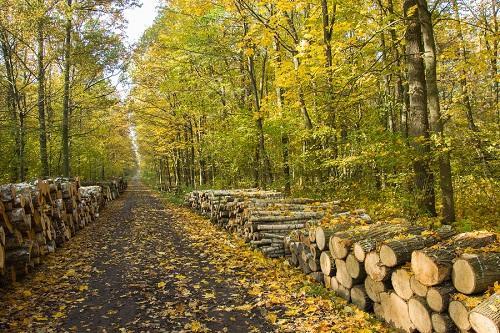 magnifique_chemin_dans_les_bois__magog_sur_chaque_ct_du_chemin_il_y_a_du_bois_de_chauffage.jpg