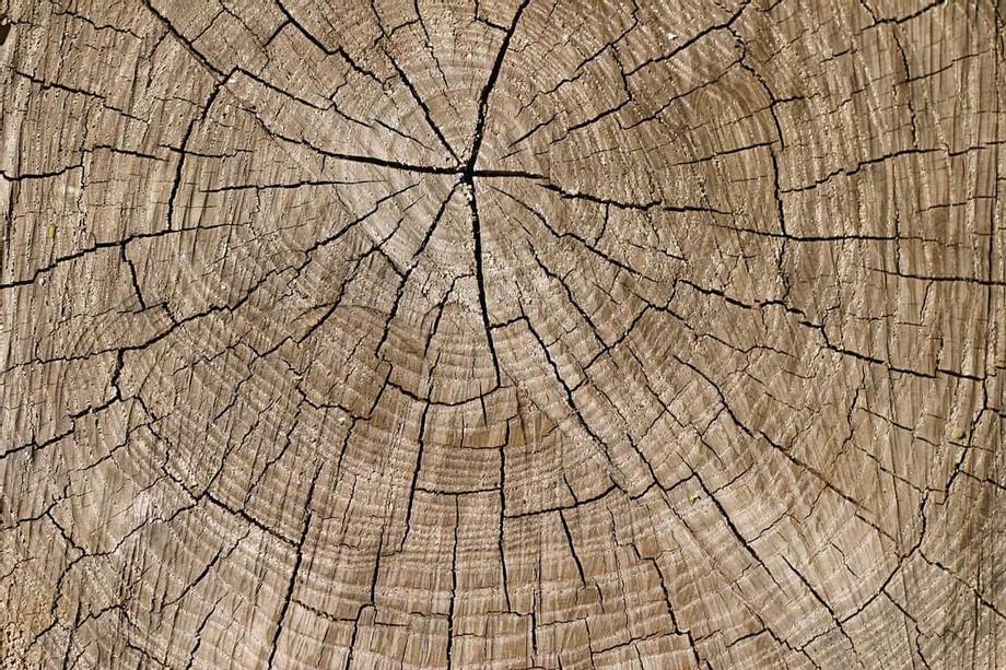stump-rotting_orig.jpg