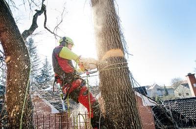 tree_felling_done_by_emondage_soreltracy_.jpg