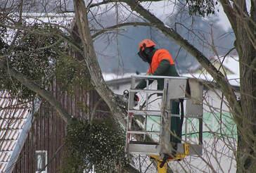 emergencty-tree-trimming-team.jpg