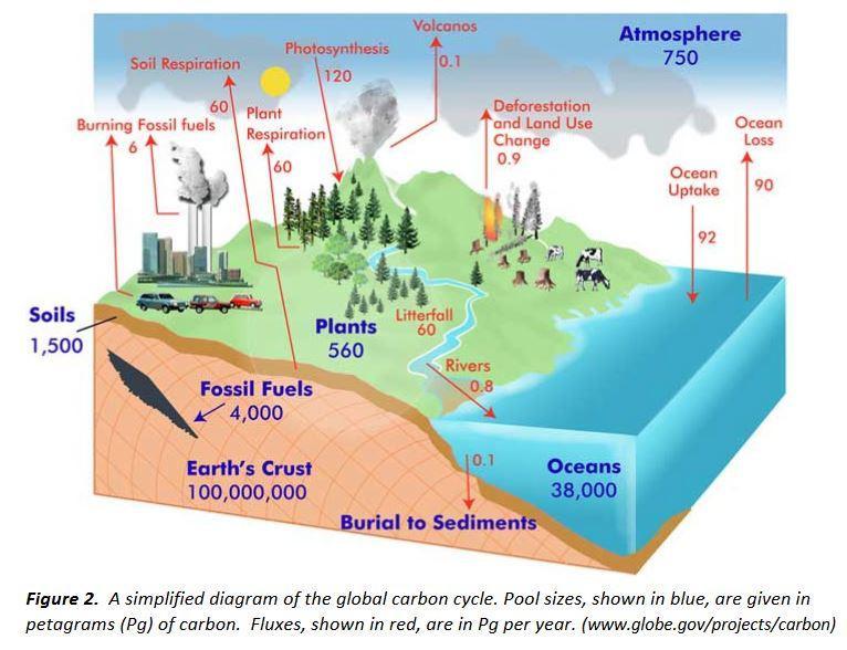 global-carbon-cycle.JPG
