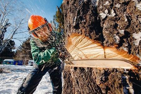 homme_qui_travaille_pour_mondage_sherbrooke_qui_est_entrain_dabattre_un_arbre.jpg