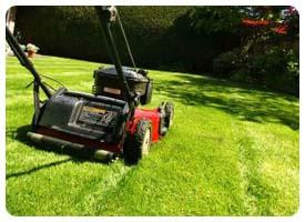 lawnmowingbackyard1800360x240.jpg
