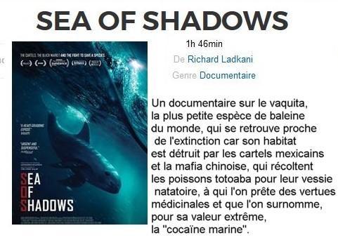 seaofshadows.JPG