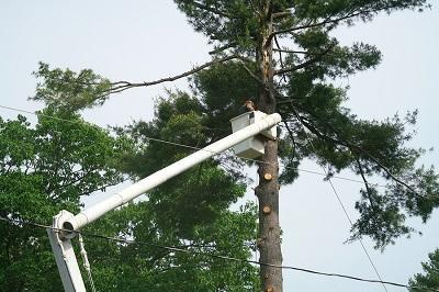 tree_cutting_done_by_emondage_soreltracy.jpg