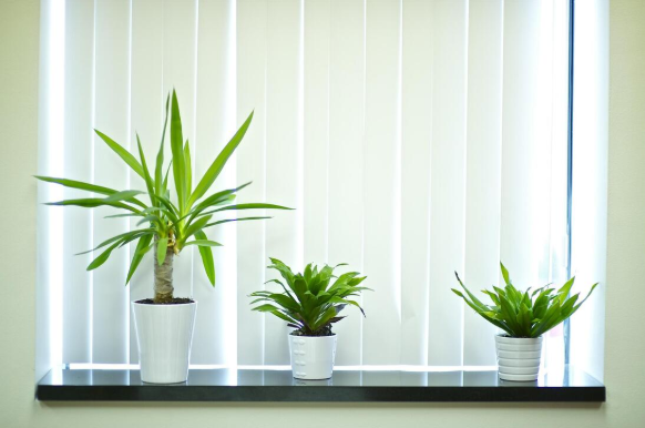 eden_prairie_blinds_cover_photo.png